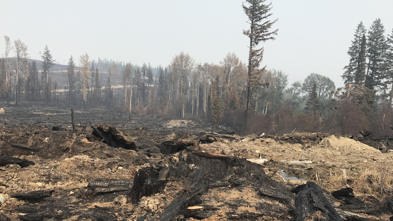 Une forêt dévastée par les flammes, en Colombie-Britannique.