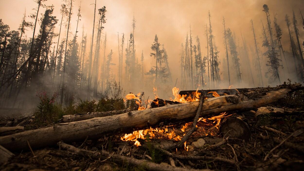 Des flammes brûlent des troncs d'arbres le long d'un chemin forestier près de Fort St. James