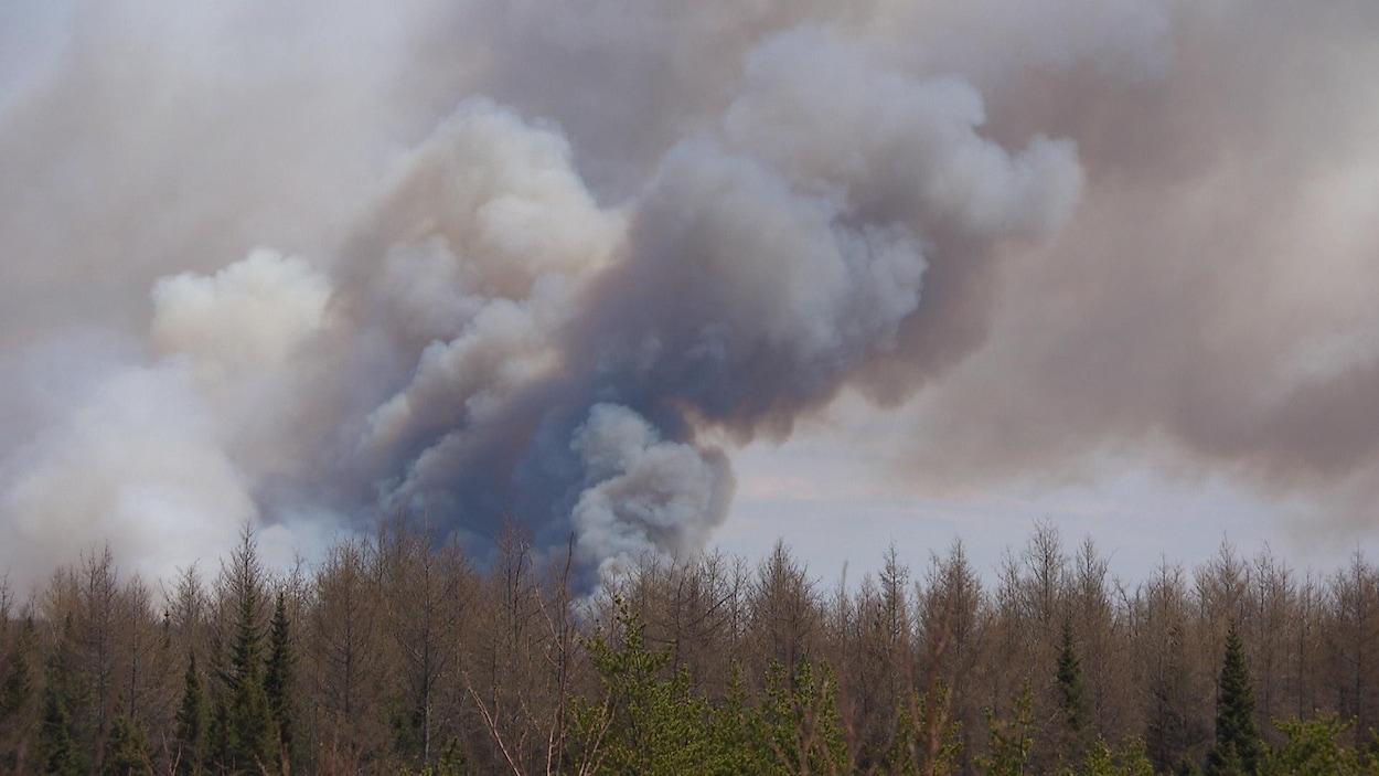 Un épais nuage de fumée s'élève par-dessus une forêt.