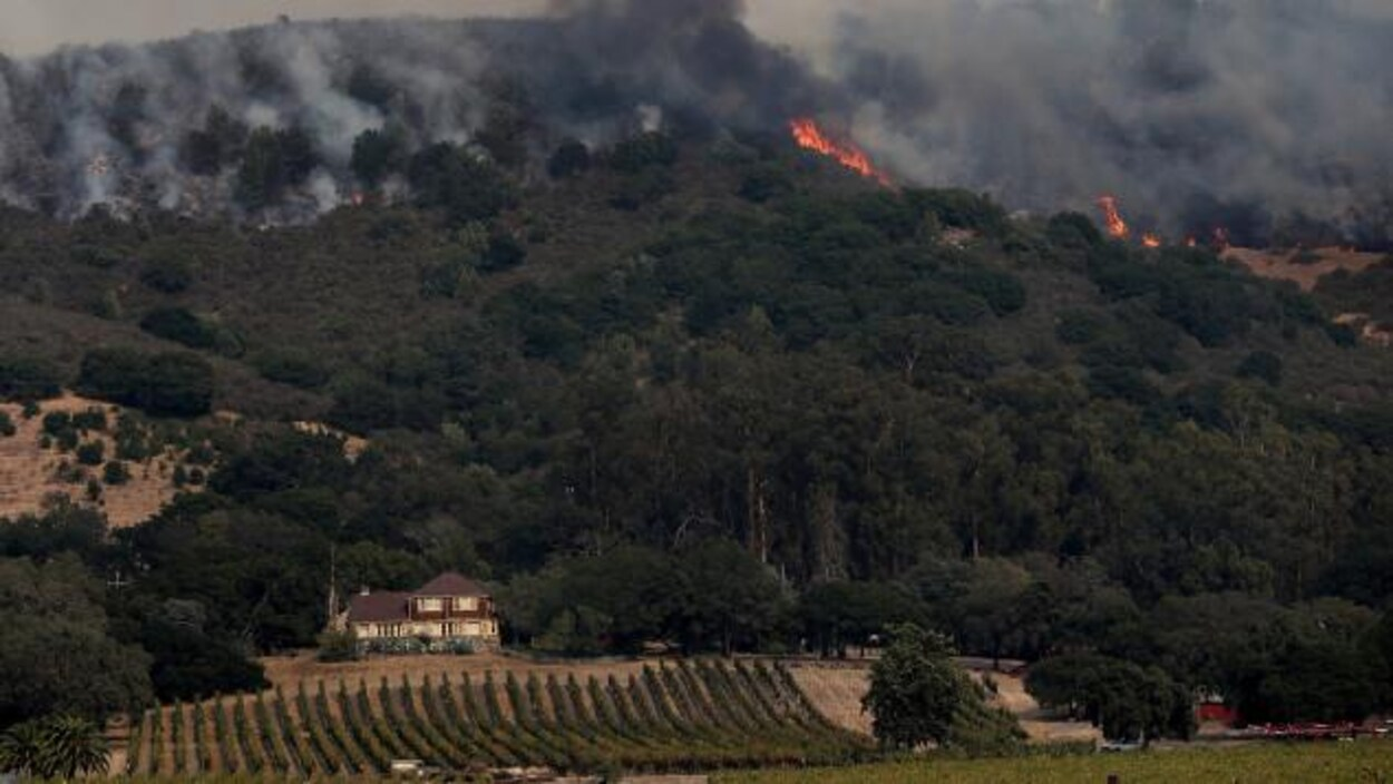 Des flammes dans une colline près des vignes dans la vallée