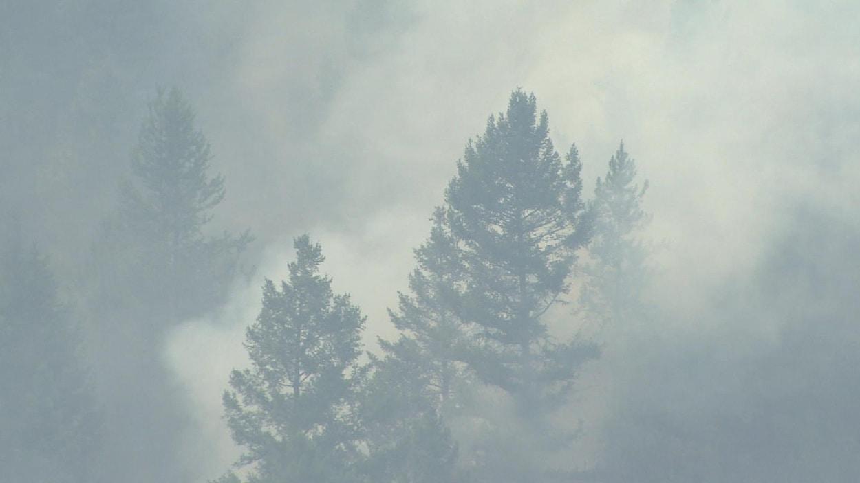 Une épaisse fumée se dégage d'un feu de forêt.