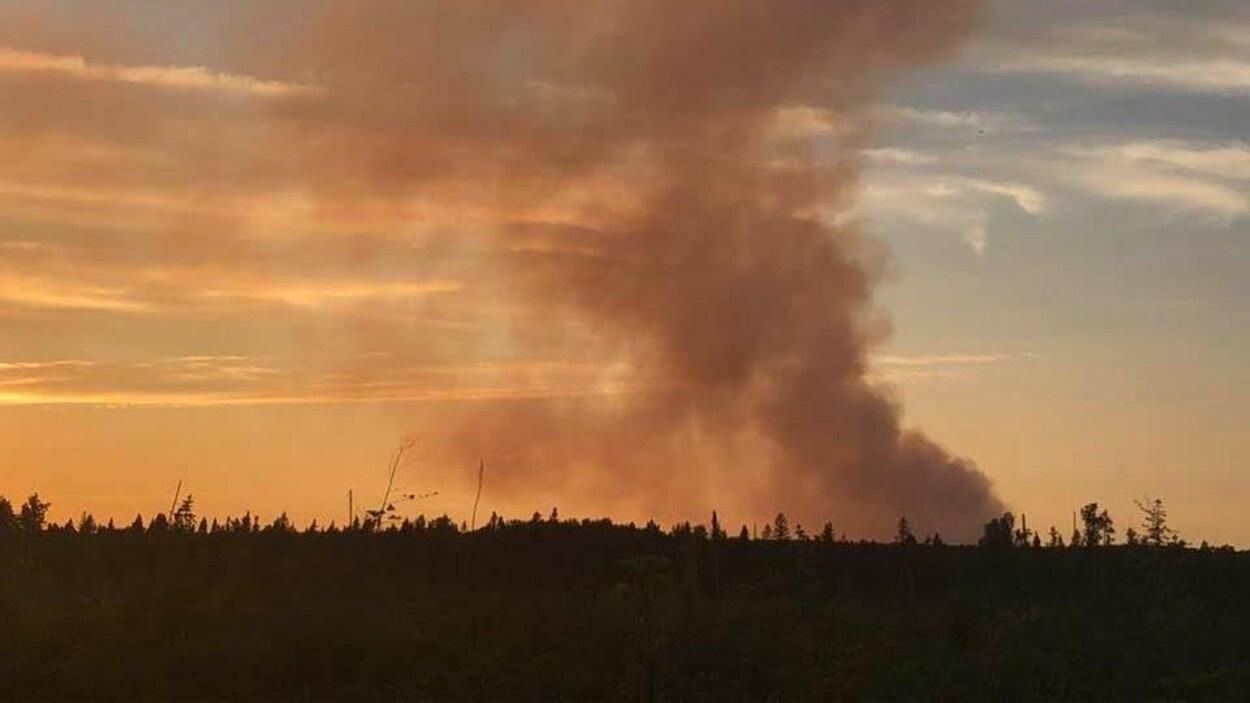 De la fumée qui émane d'une forêt.