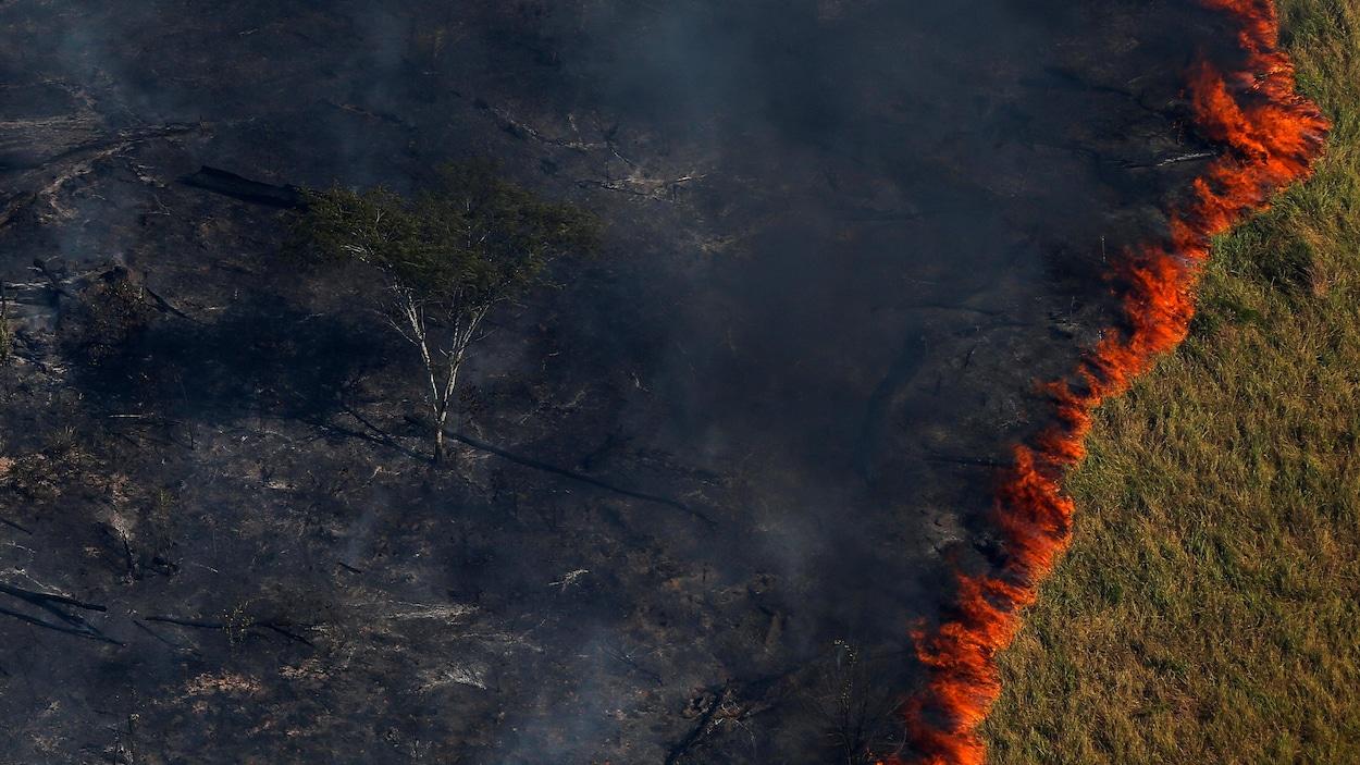 Une zone de forêt est détruite par le feu.