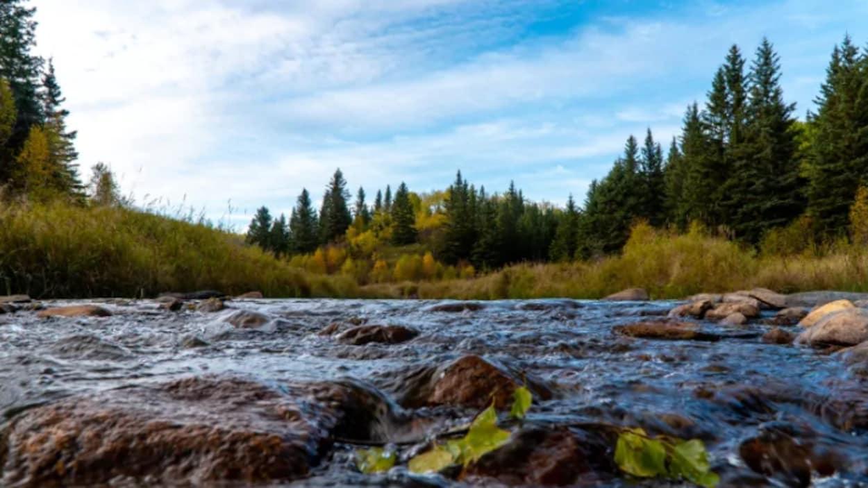 Un ruisseau et des arbres.