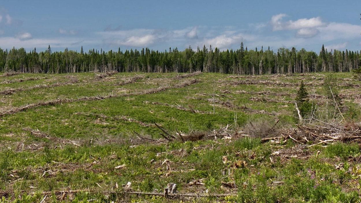 Des arbres qui croissent plus vite que les salaires ici - Coupe des arbres fruitiers ...