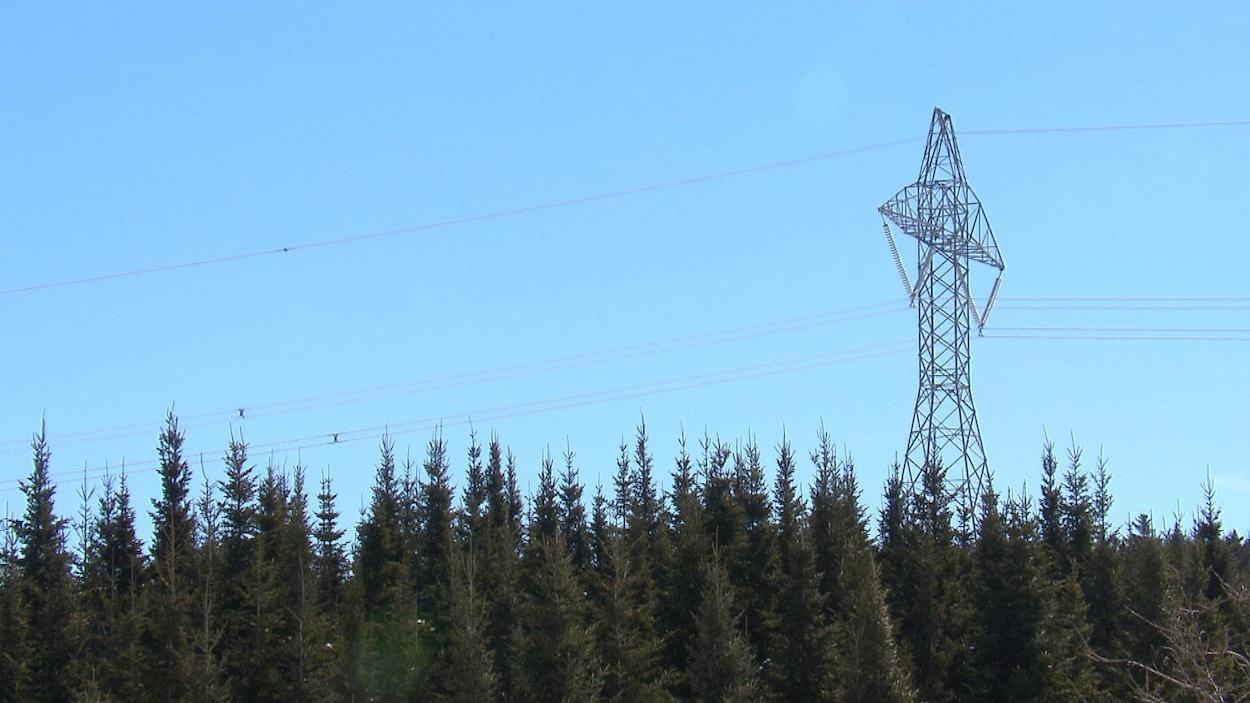 Un pylône situé au coeur d'une forêt.