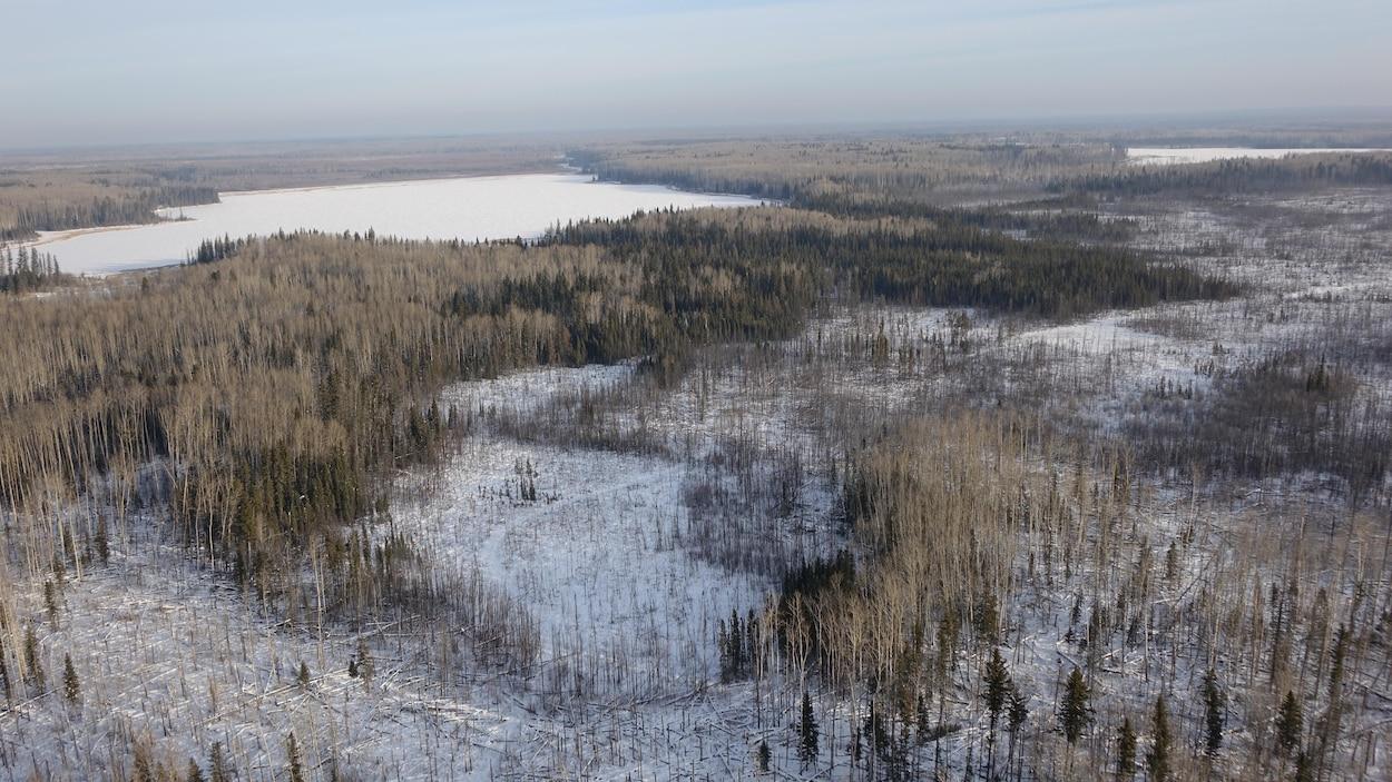 Vue aérienne d'une forêt en hiver.