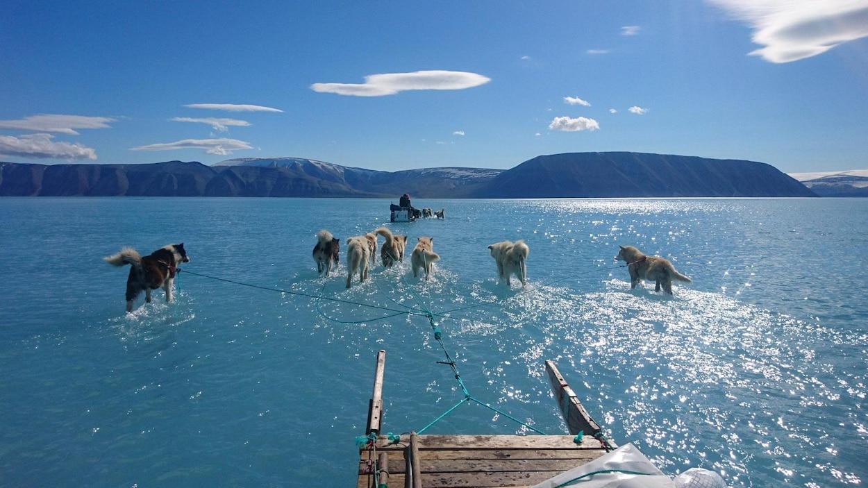 Des chiens et des traîneau avancent sur la glace dans un bras de mer recouvert de quelques centimètres d'eau.