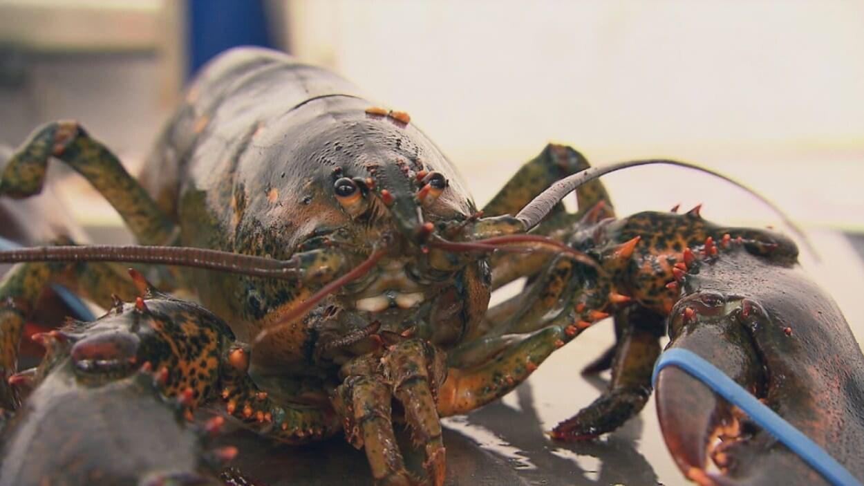 Gros plan d'un homard