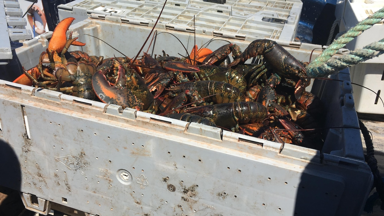 Débarquements de homard