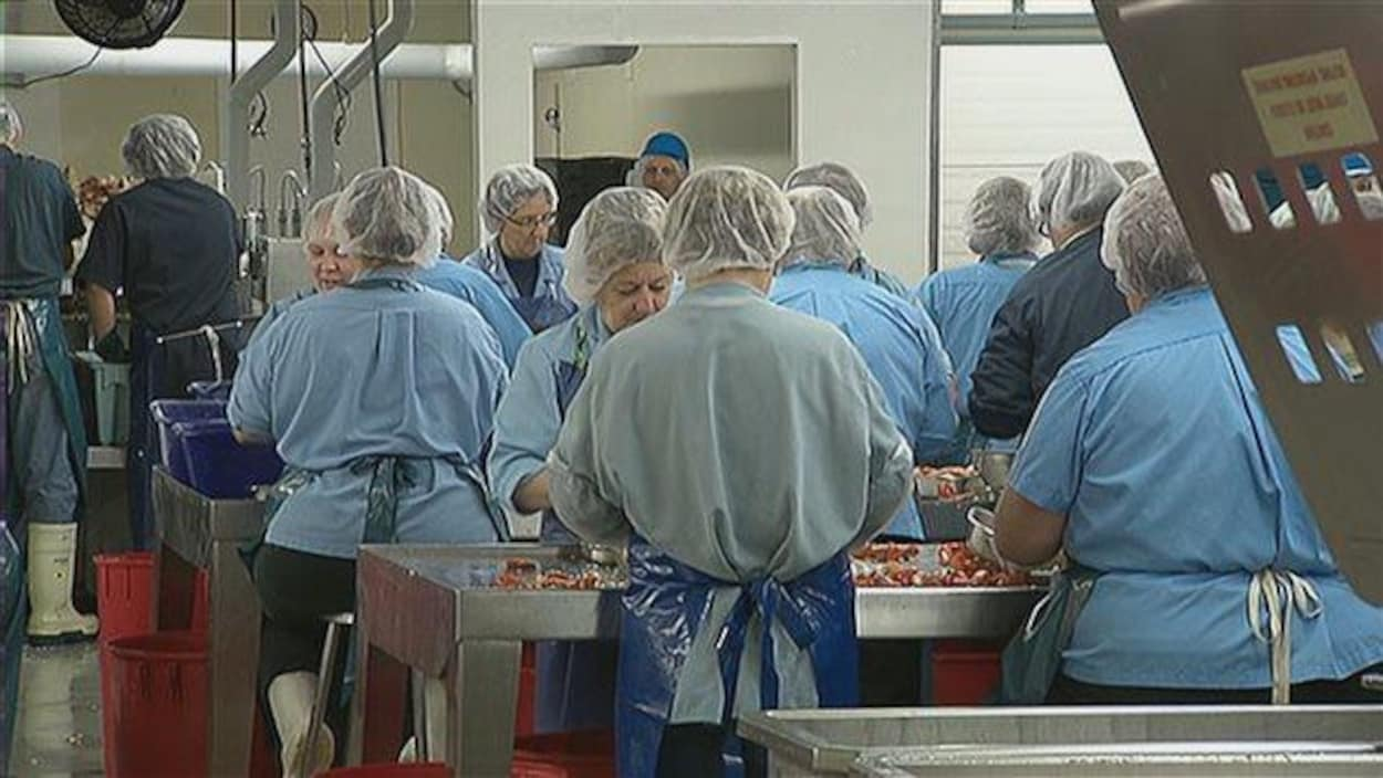 Des travailleurs dans une usine de transformation du homard