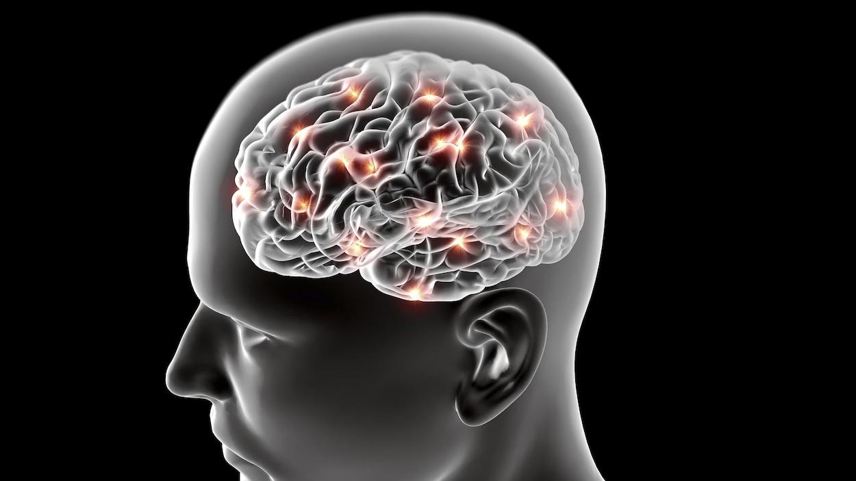 Illustration du cerveau d'un homme.