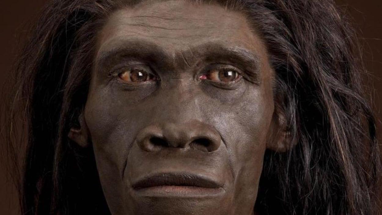 Représentation artistique d'un Homo erectus