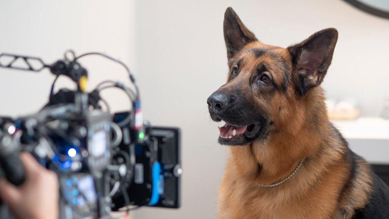 Un chien devant la caméra d'un tournage télévisé.