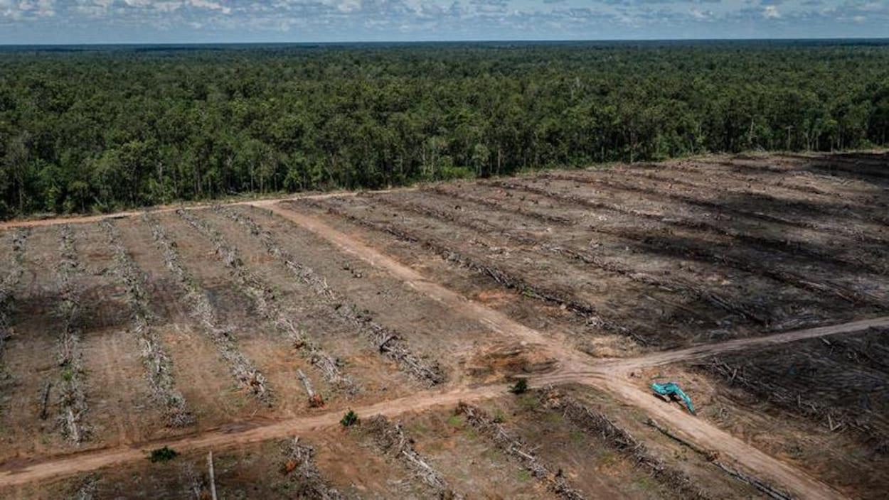 Vue aérienne de la déforestation d'une plantation de palmiers utilisés dans la production d'huile de palme.