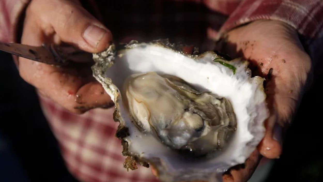 Des mains tendent une huître ouverte.