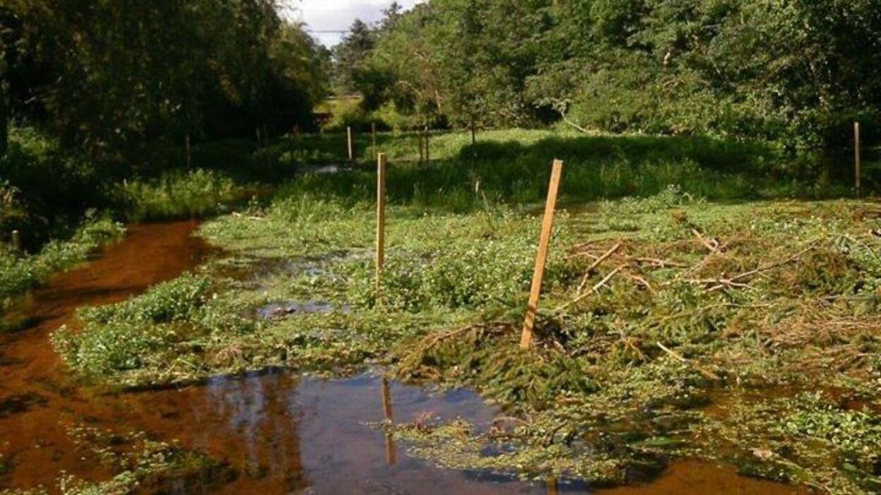 Hyde Creek, dans la région de Cornwall à l'Île-du-Prince-Édouard.