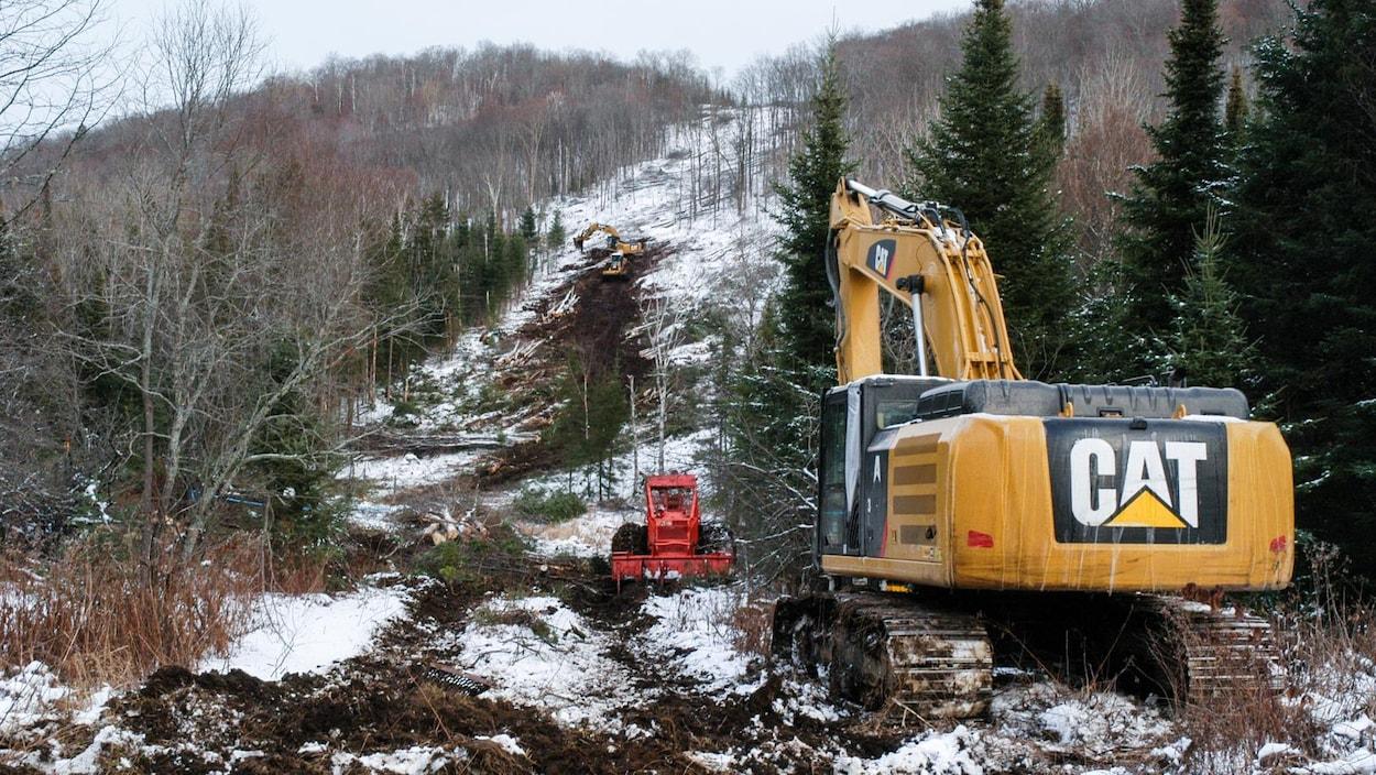Une pelle mécanique travaille au déboisement d'un terrain forestier un peu enneigé.