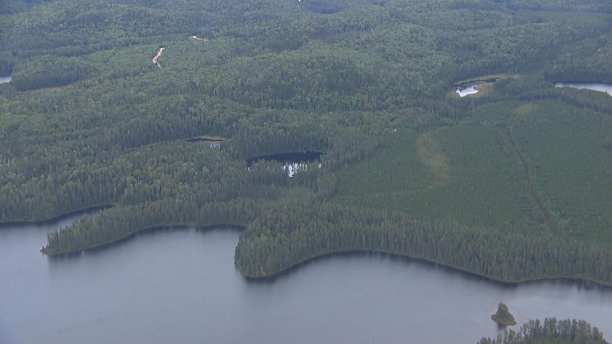 Image aérienne d'une ancienne coupe forestière en train de repousser. Au bas de l'écran se trouve une étendue d'eau.
