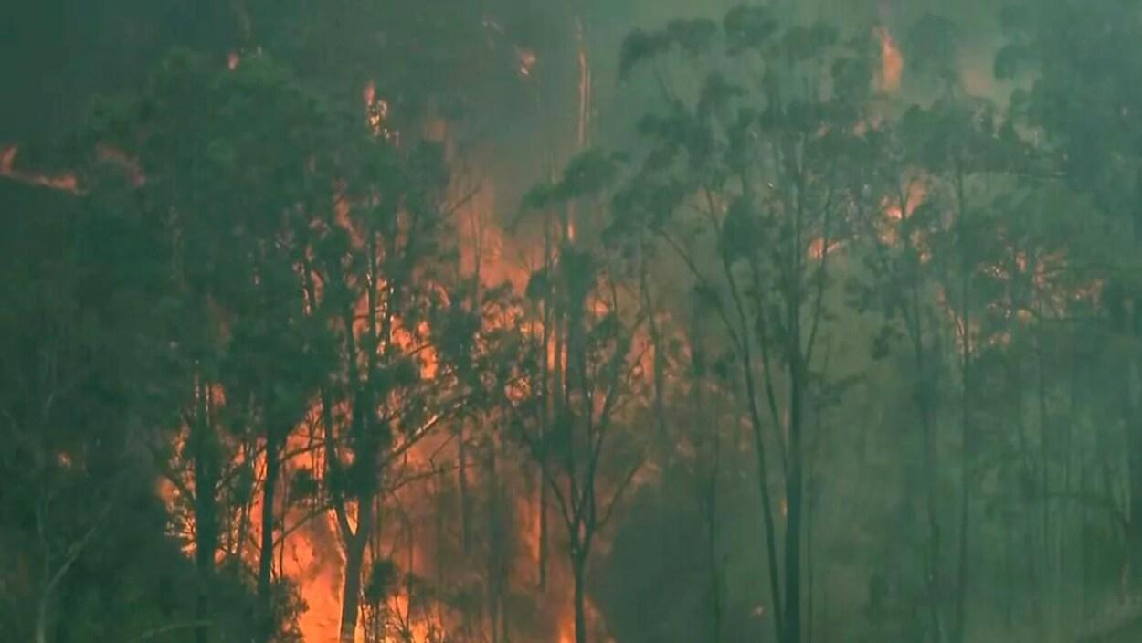 Une forêt ravagée par un incendie.