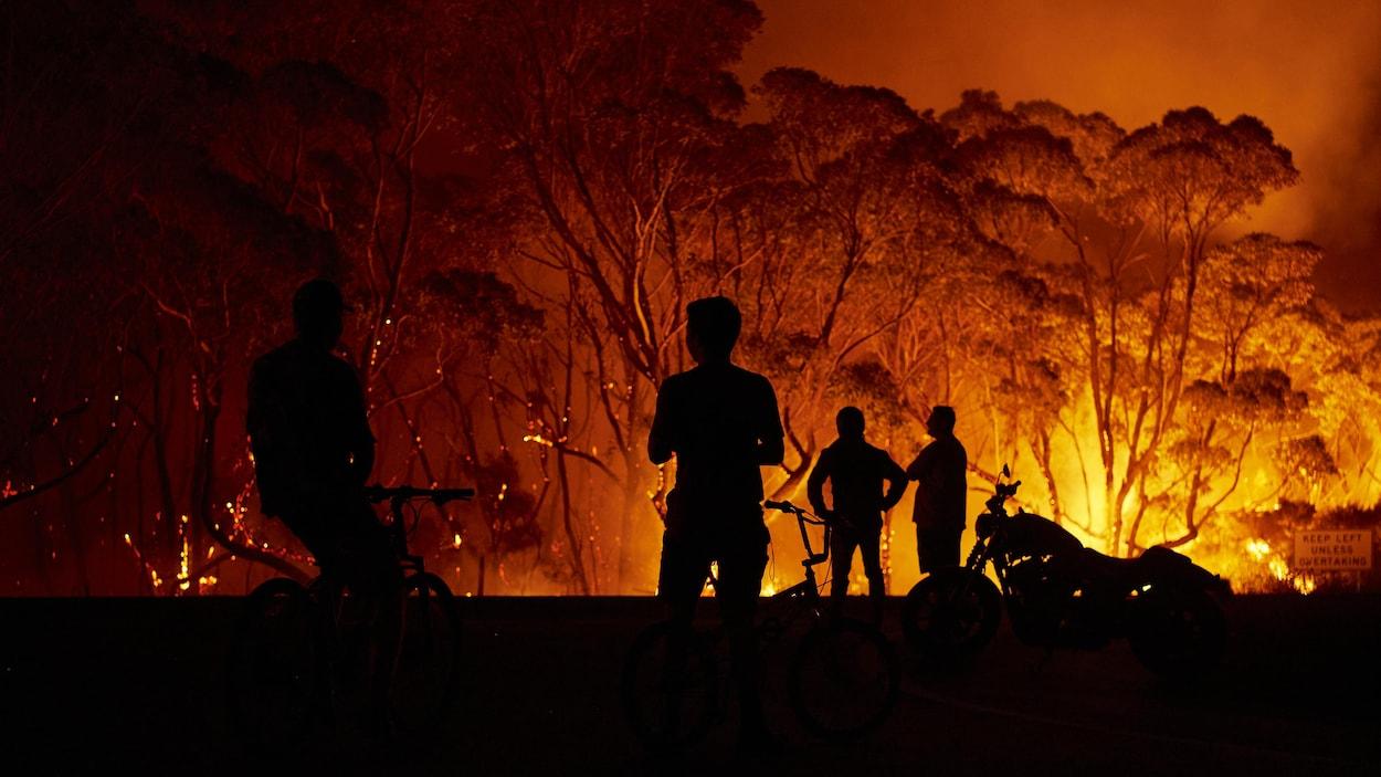 Des résidents observent des flammes géantes ravager les arbres.