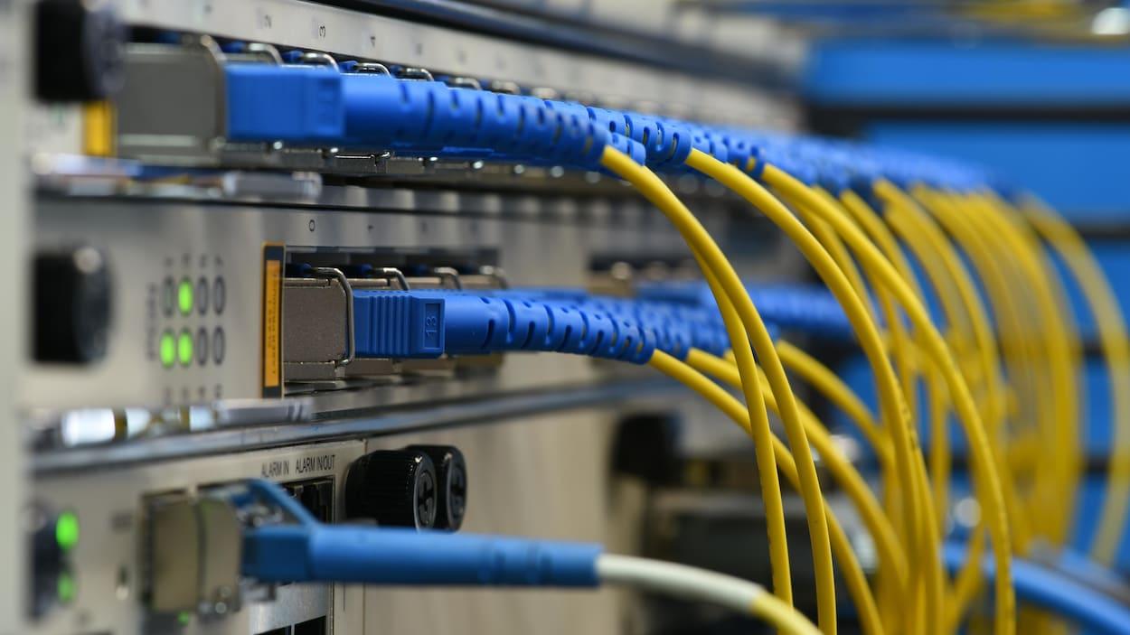 Des câbles de fibre optique branchés dans un appareil de réseautage.