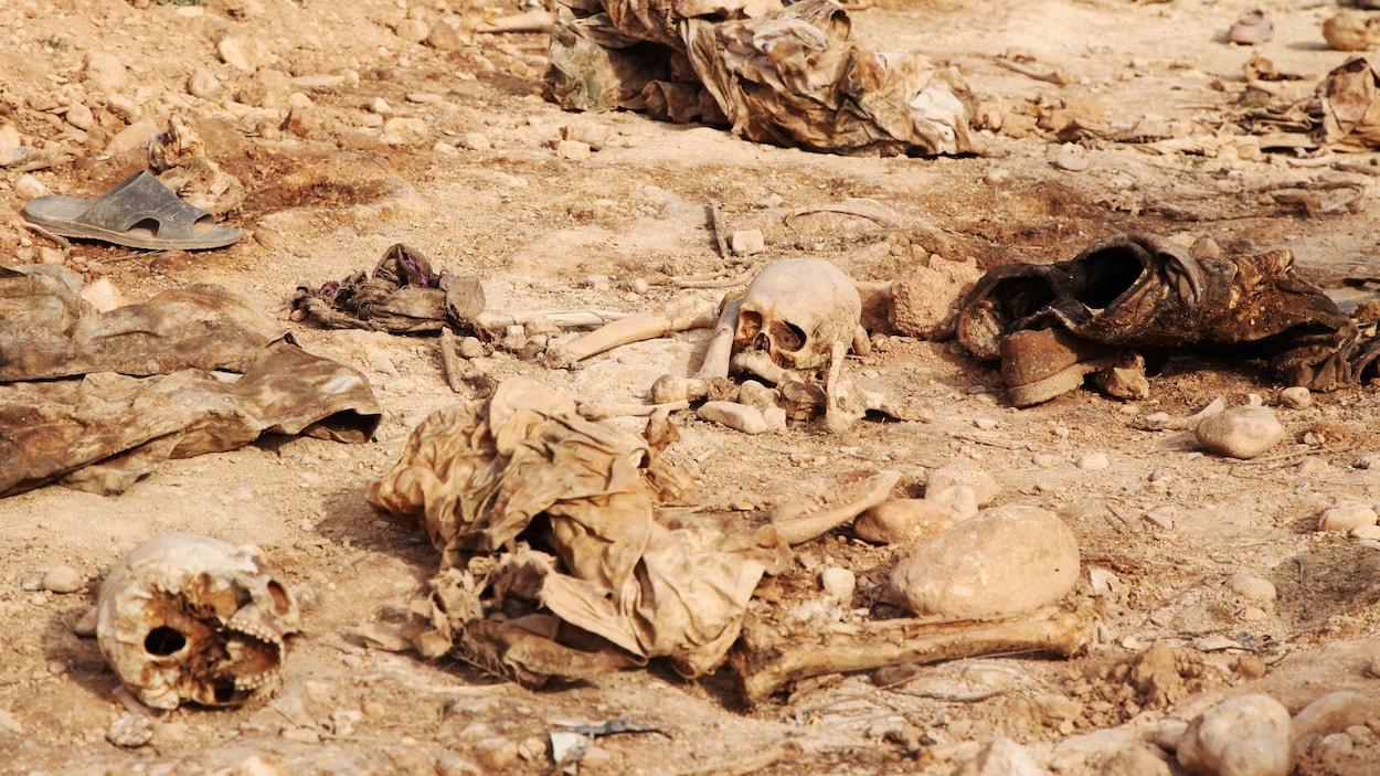 Des crânes humains jonchent le sol dans une fosses communes près de Sinjar, dans le nord de l'Irak.
