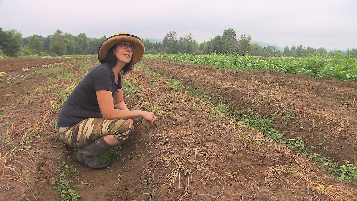 Isabelle Forgues récoltera son safran biologique pour la première fois cet automne.