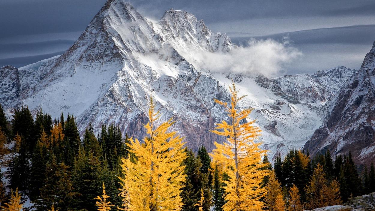 Des montagnes enneigées imposantes avec en arrière-plan une forêt de conifères et de feuillus en automne.