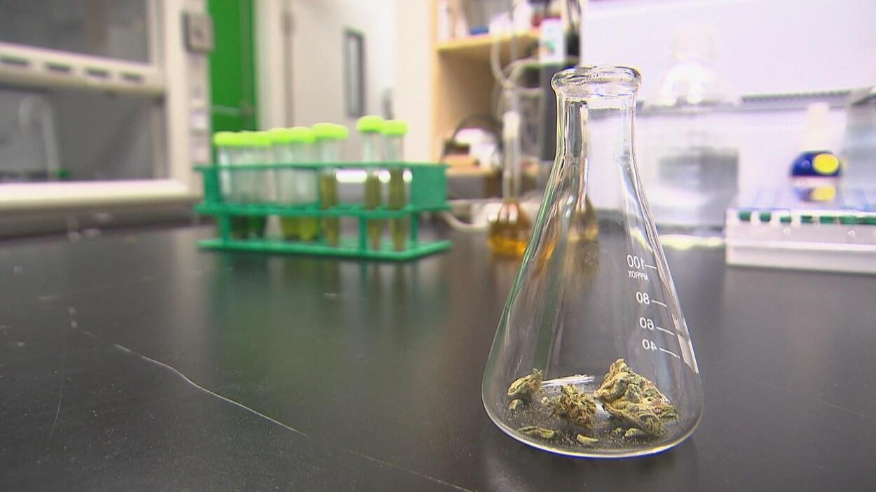 Du cannabis dans un contenant de laboratoire.