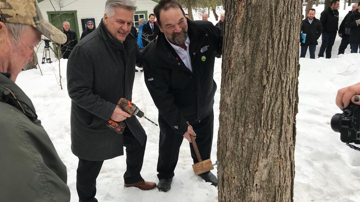 Le ministre de l'Agriculture, des Pêcheries et de l'Alimentation, Laurent Lessard, et le président de la Fédération des producteurs acéricoles, Serge Beaulieu, entaillent un érable au parc du Bois-de-Coulonge.