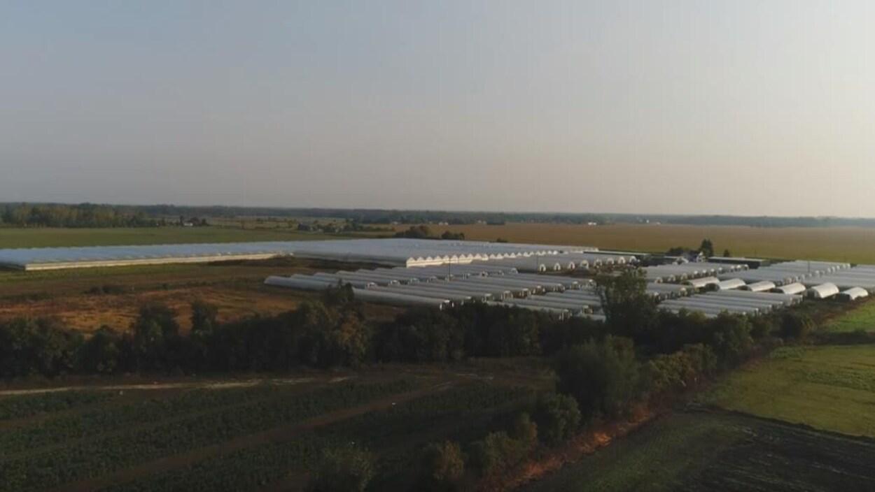 Des serres sont installées sur un terrain agricole.