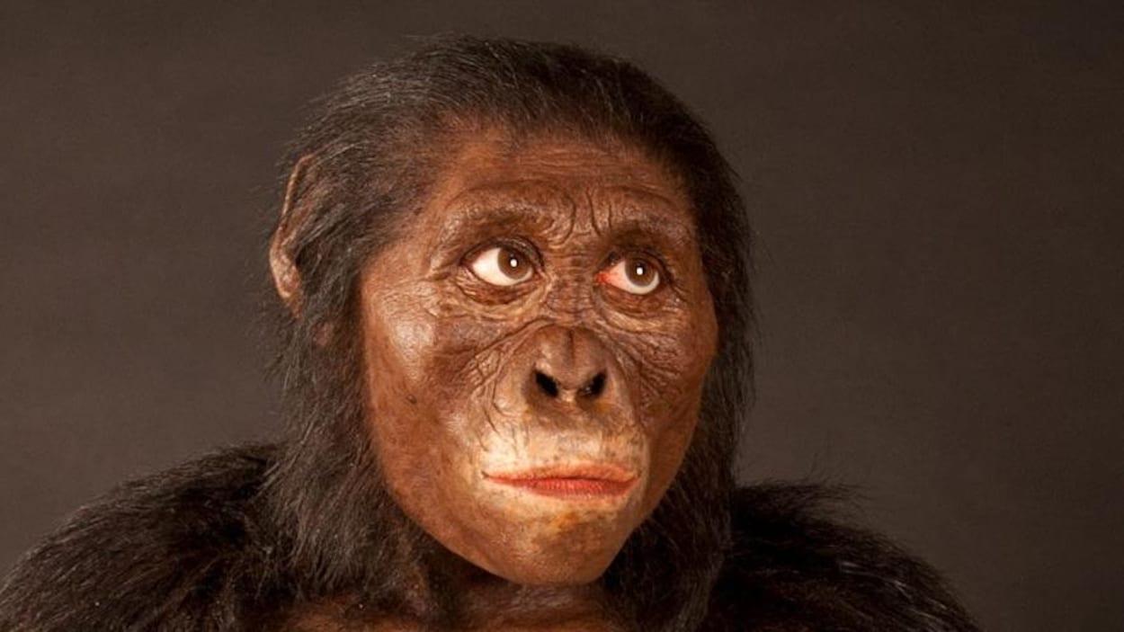 Reconstitution de l'apparence de Lucy réalisée par John Gurche et exposée au musée d'histoire naturelle de Cleveland.