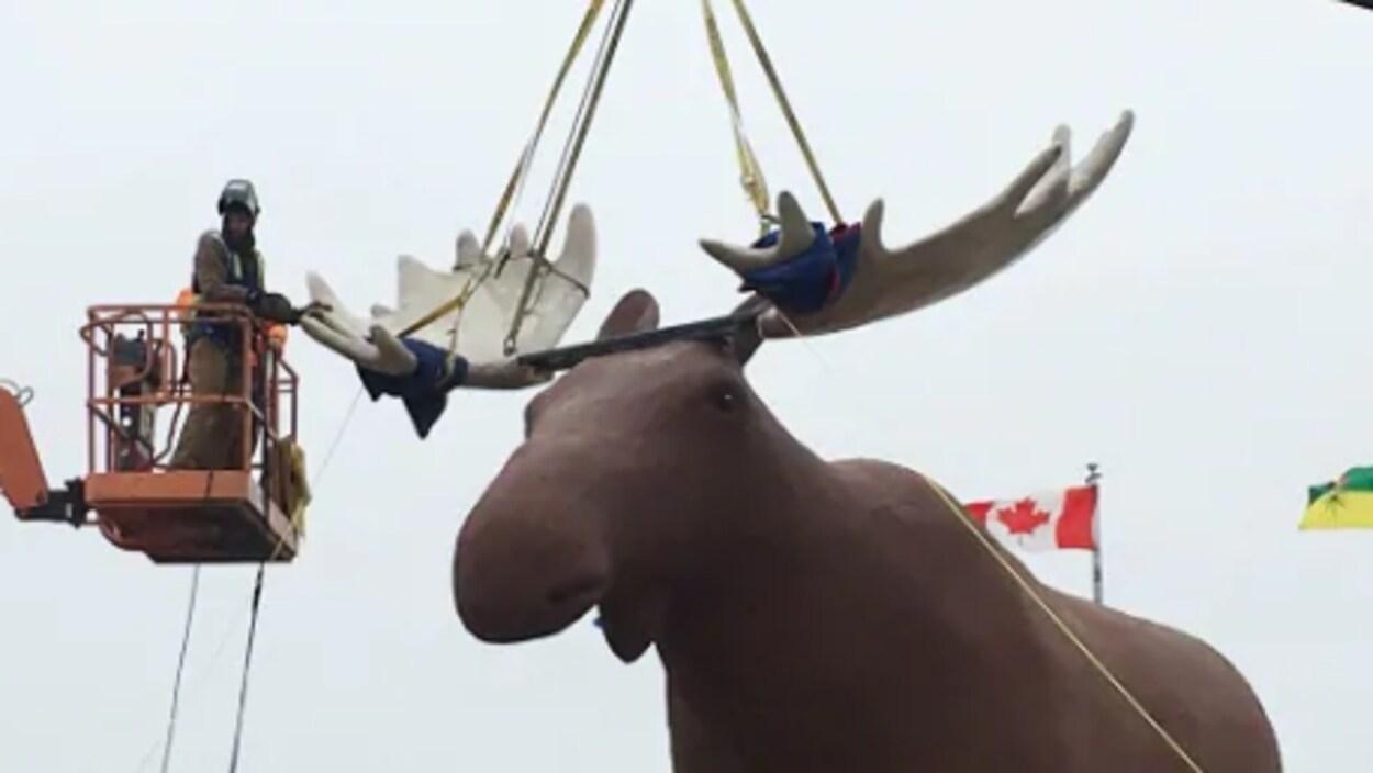 Des travailleurs installent des nouveaux bois à une sculpture d'orignal.