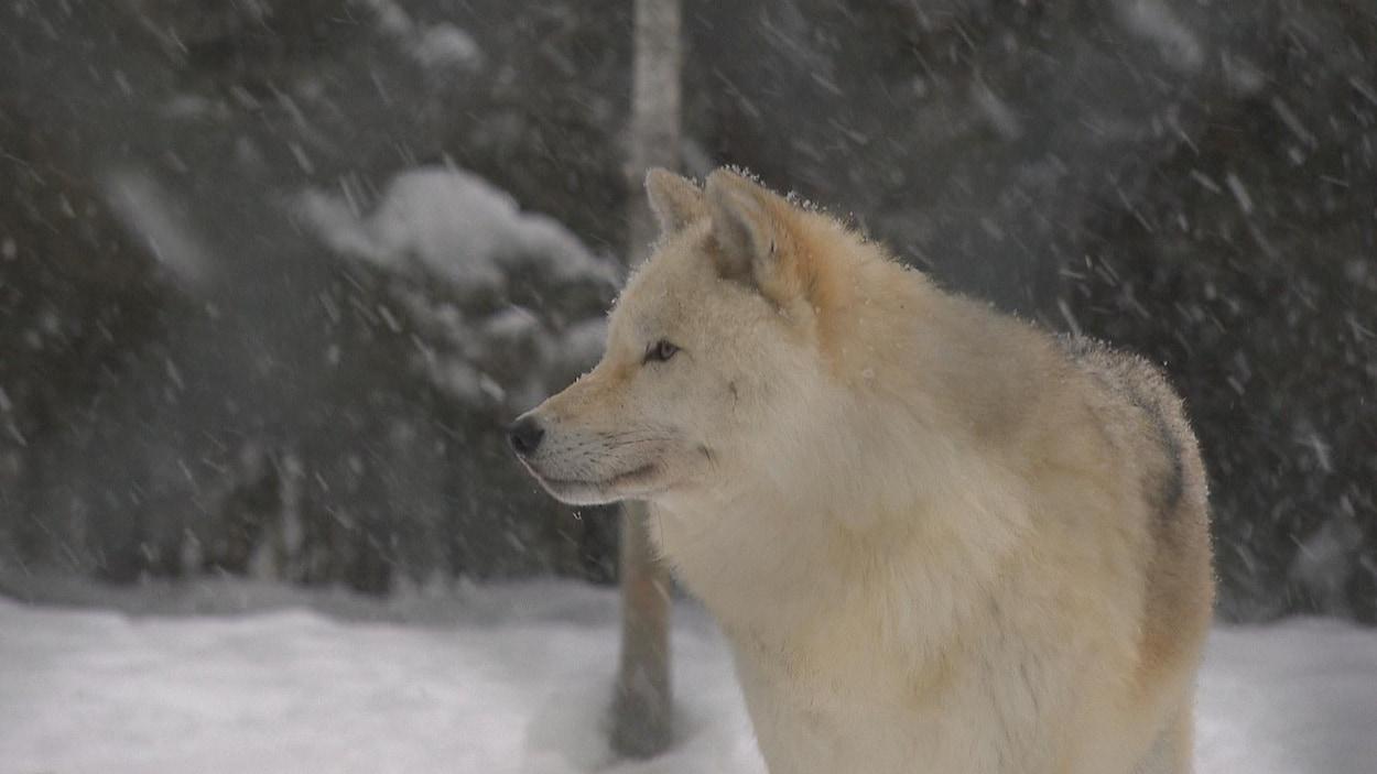Loup datantTennessee sites de rencontre