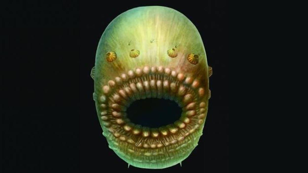 Représentation artistique du Saccorhytus
