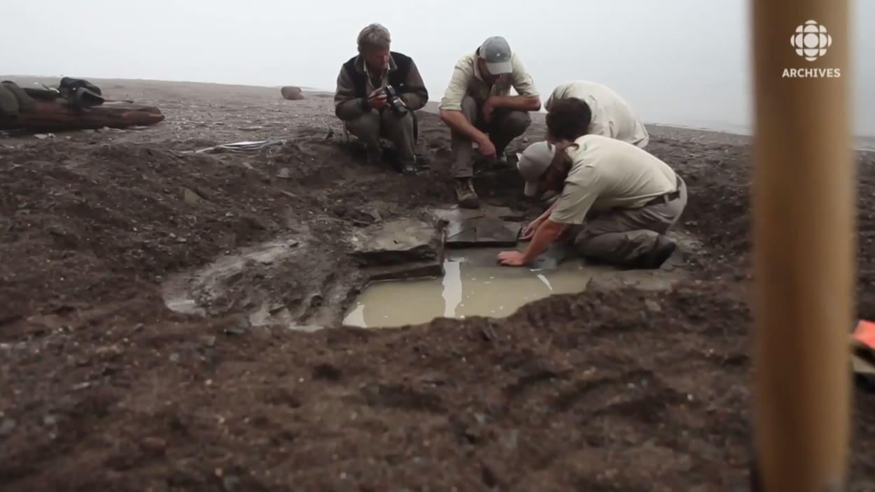 Quatre paléontologues fouillent le site de Miguasha à la recherche de fossiles.