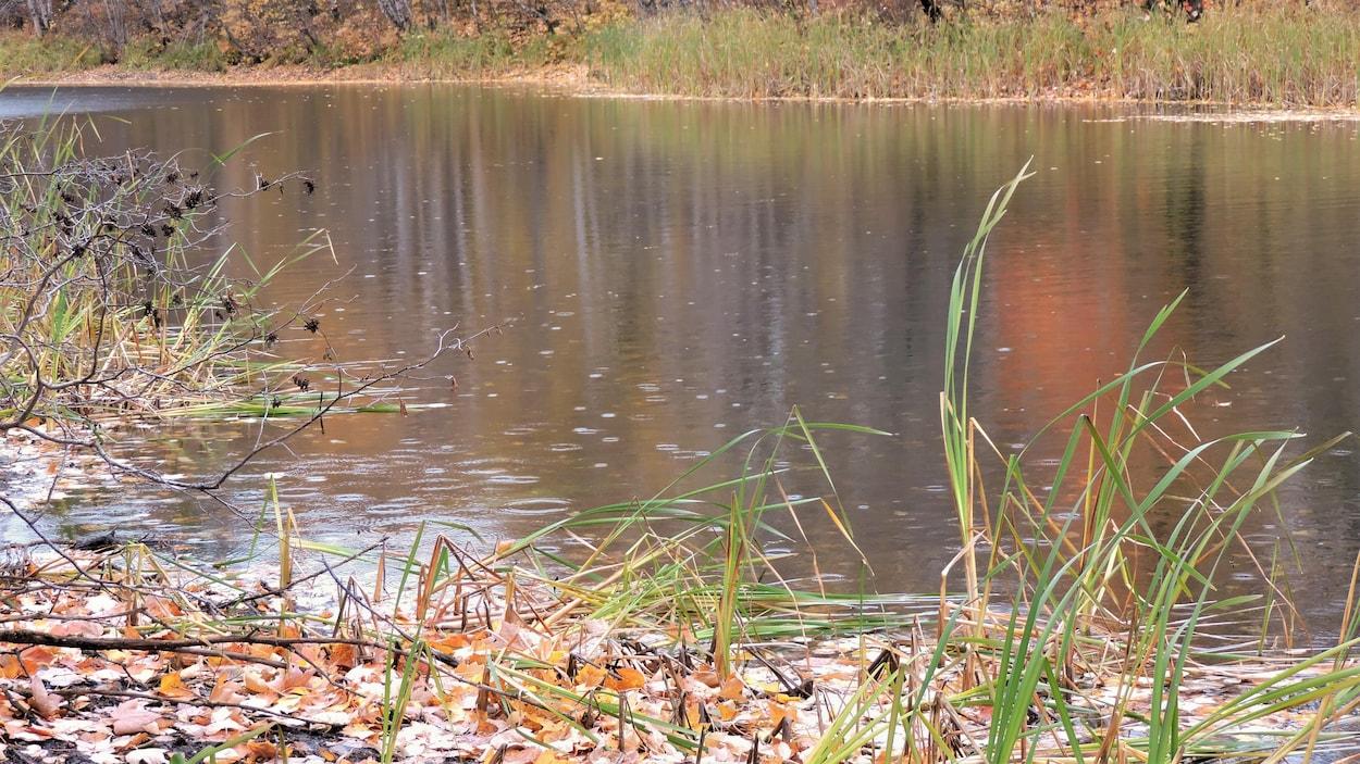 Une étendue d'eau entourée de végétation.