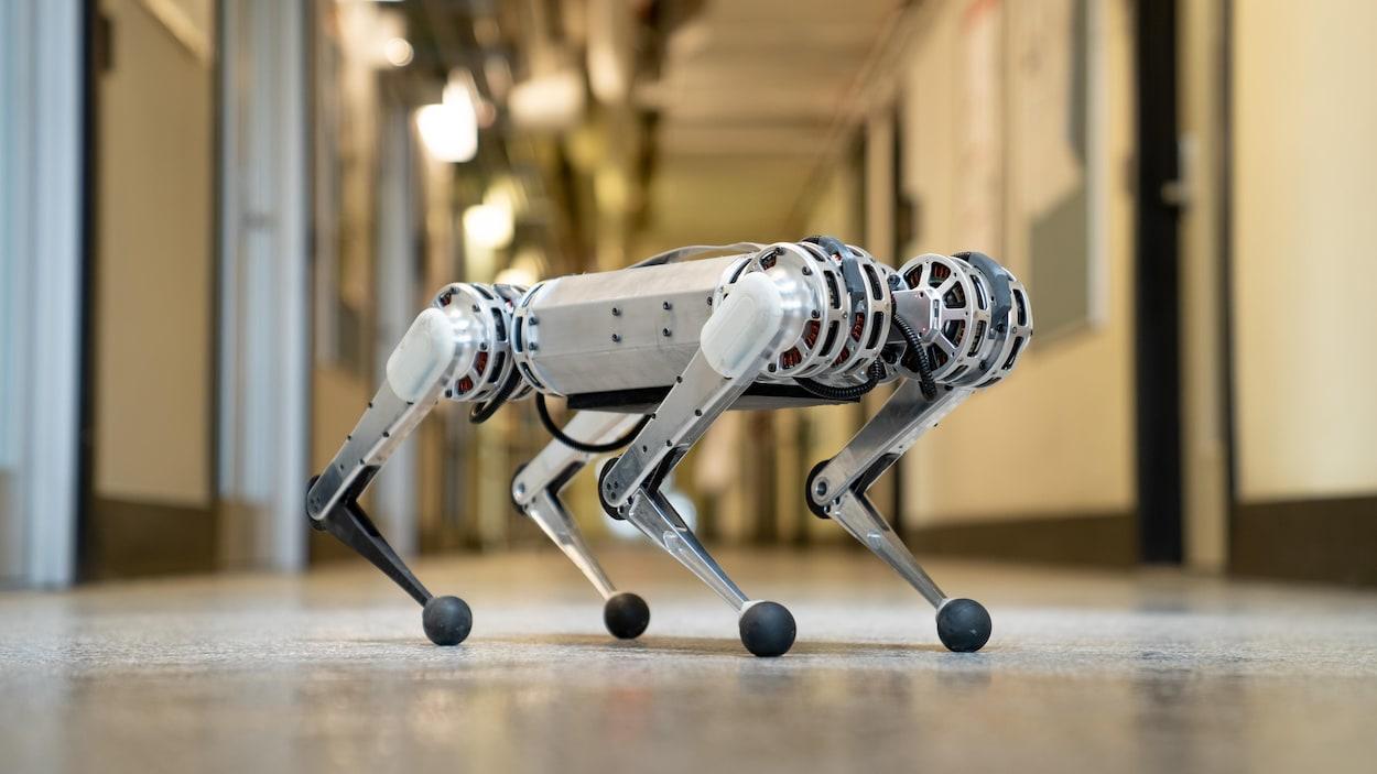 Une photo du robot Mini Cheetah dans un corridor du MIT. Le robot a quatre pattes et est à peu près de la taille d'un chien.