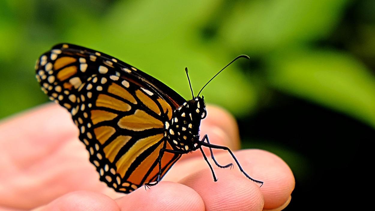 Un papillon porté par une main