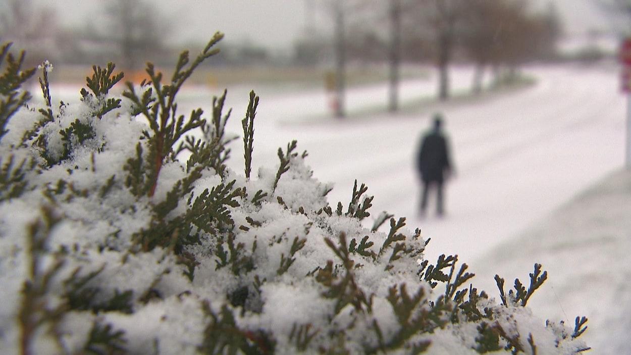 De la neige dans un arbuste