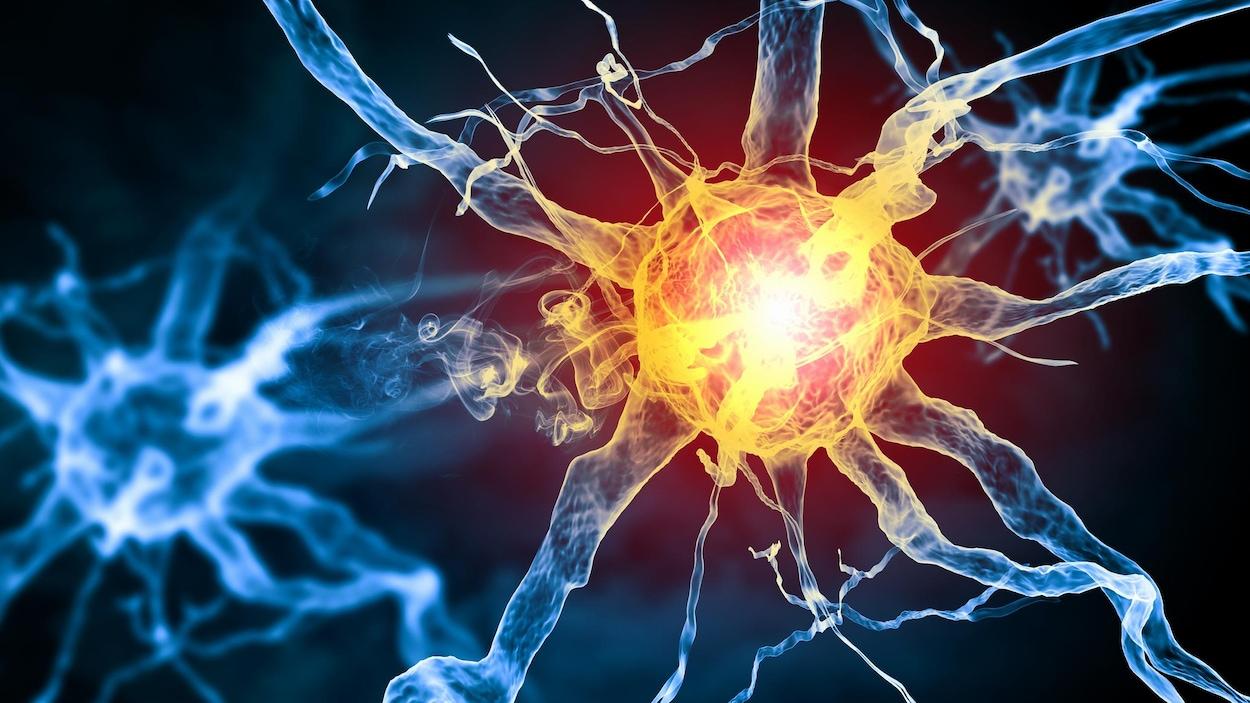 Représentation artistique de neurones.
