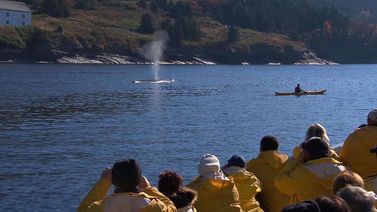 Observation des baleines dans l'estuaire du Saint-Laurent