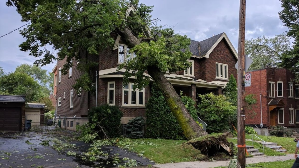tornades et vents violents les dommages sont ils couverts ici radio. Black Bedroom Furniture Sets. Home Design Ideas
