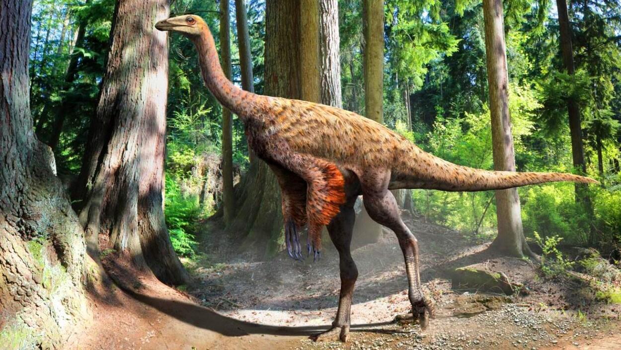 Vision d'artiste de l'Ornithomimus, par Julius Csotonyi, basée sur les dernières preuves scientifiques.