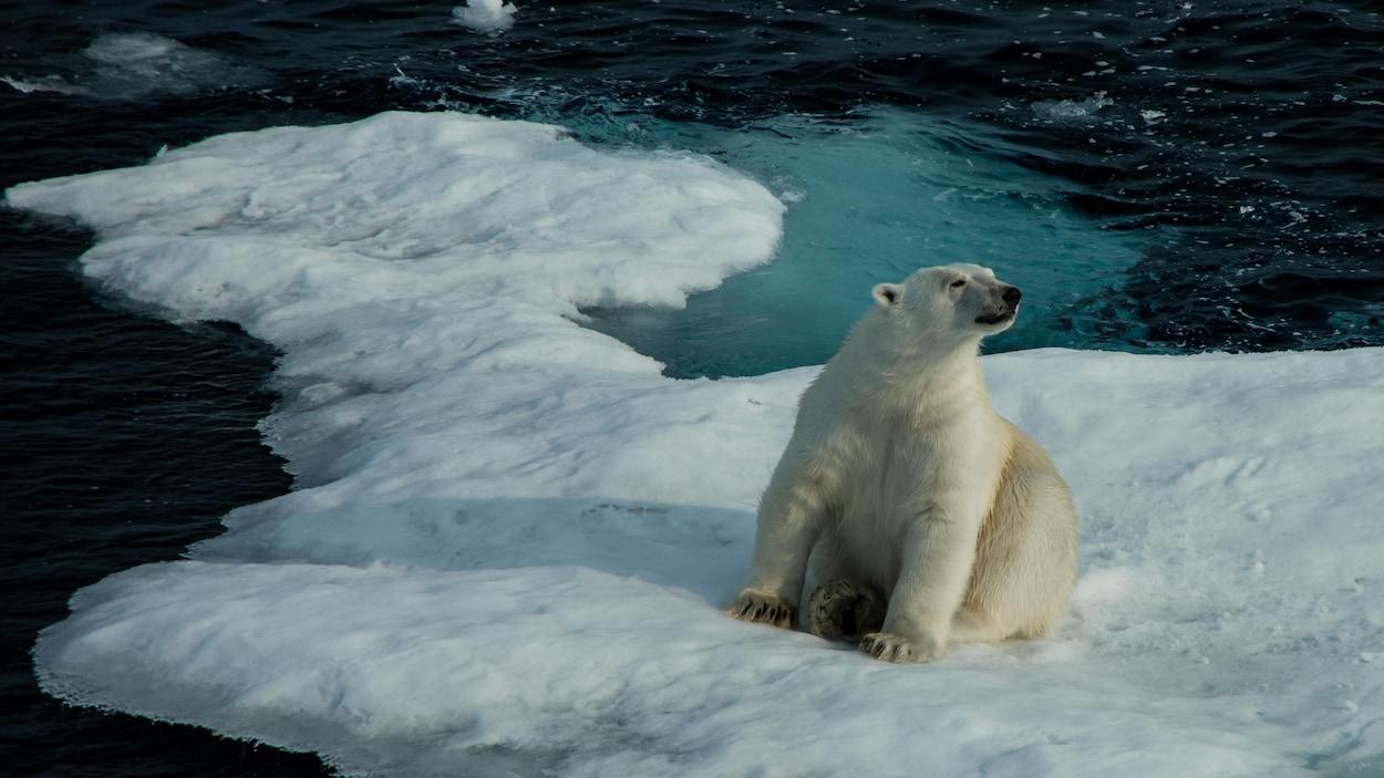 Un ours polaire sur une masse de glace dans le détroit de Lancaster, près de l'île de Baffin.