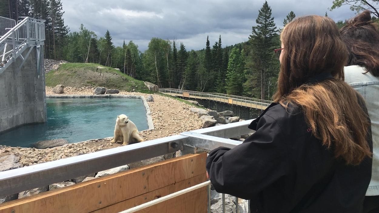Des gens qui observent un ours polaire.