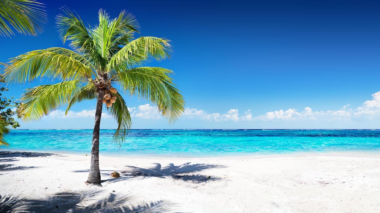 Une palmier près de la mer.