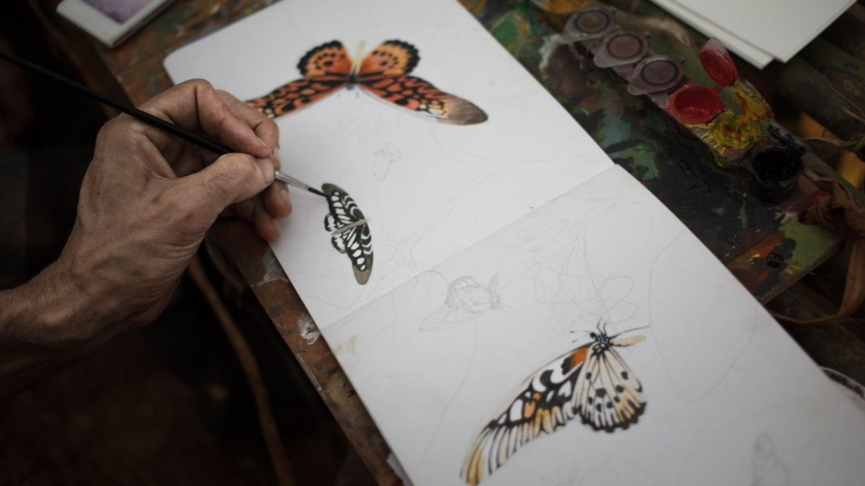 Dessins du papillon.