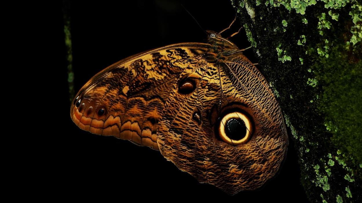 Un papillon de nuit